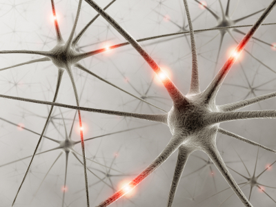 How Do Neurons Communicate?